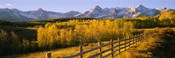 Trees in a field near a wooden fence, Dallas Divide, San Juan Mountains, Colorado