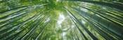 Low angle view of bamboo trees, Hokokuji Temple, Kamakura, Kanagawa Prefecture, Kanto Region, Honshu, Japan