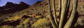 Desert Landscape, Organ Pipe Cactus National Monument, Arizona, USA