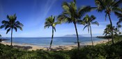 Palm trees on the beach, Maui, Hawaii, USA