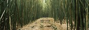 Path with stones surrounded by Bamboo, Oheo Gulch, Seven Sacred Pools, Hana, Maui, Hawaii, USA
