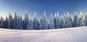 Snow covered trees on a landscape, Belchen Mountain, Black Forest, Baden-Wurttemberg, Germany