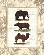 African Animals II