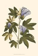 Lavender Floral II