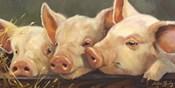 Pig Heaven