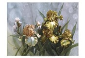 Hadfield Irises I