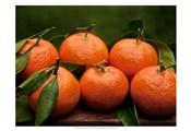 Satsuma Tangerines II
