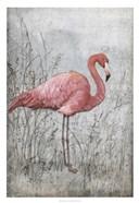 American Flamingo I