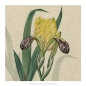 Floral Delight VII