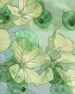Mint Progeny III