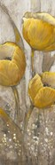 Ochre Tulips II