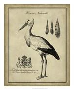 Antiquarian Stork