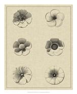 Floral Rosette I