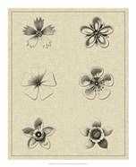 Floral Rosette II