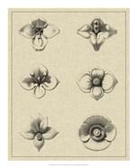 Floral Rosette IV