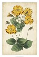 Botanical Display I
