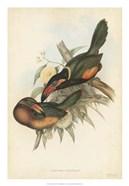 Tropical Toucans V
