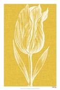 Chromatic Tulips IV