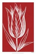 Chromatic Tulips VIII