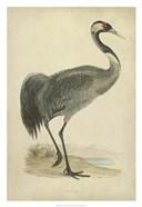 Morris Crane I