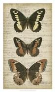 Butterfly Script I