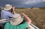 Rear view of two safari photographers filming a giraffe