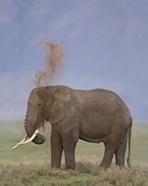 African Elephant, Ngorongoro Crater, Arusha Region, Tanzania