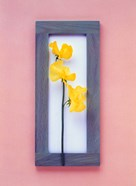 Rectangular purple frame with yellow flowers on green stems in center on pink background