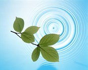 Twig with green leaves above perfect water circles