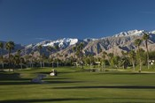 Palm trees in a golf course, Desert Princess Country Club, Palm Springs, Riverside County, California, USA