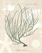 Gorgonia Miniacea on Linen Sea Foam