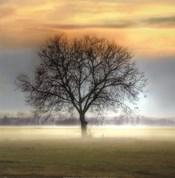 Misty Silhouette