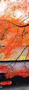 Autumn Colors, Sagano Kyoto Japan