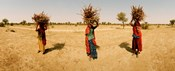 Women carrying firewood on their heads, India