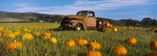 Old Rusty Truck in Pumpkin Patch, Half Moon Bay, California, USA