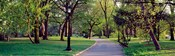 Trees in a public park, Central Park, Manhattan, New York City, New York State, USA