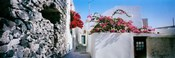 Flowers on rooftop of a house, Santorini, Greece