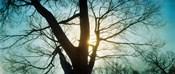 Sunlight shining through a bare tree, Prospect Park, Brooklyn, Manhattan, New York City, New York State, USA