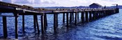 Seagulls on a pier, Whidbey Island, Island County, Washington State, USA