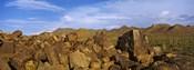 Signal Hill with Petroglyphs, Saguaro National Park, Tucson, Arizona, USA