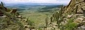 Saguaro cactus, Tucson Mountain Park, Arizona