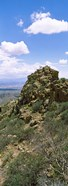 Tucson Mountain Park facing East, Tucson, Arizona, USA