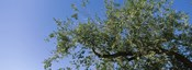 Low angle view of a tree branch against blue sky, San Rafael Valley, Arizona, USA