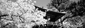 Golden Gate Park, Japanese Tea Garden (black & white)