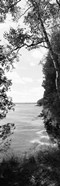 Trees at the lakeside in black and white, Lake Michigan, Wisconsin