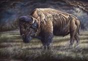 Spirit Of The Plains (Bison)