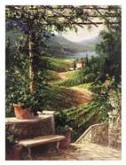 Chianti Vineyard