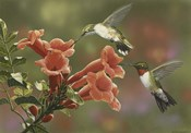 Hummingbirds and Trumpet Flowers