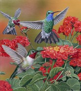 Hummingbirds & Flowers