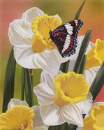 Daffodils & Butterfly
